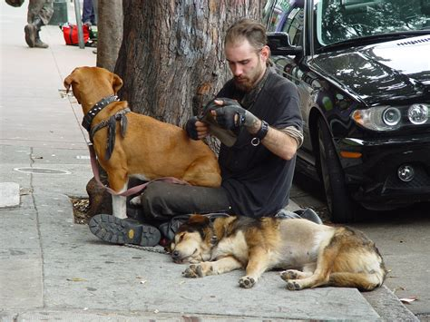 Homeless with dogs   Homeless with dogs Haight Street San