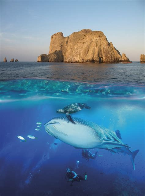 Book Now   Malpelo Tours   Diving with Sharks