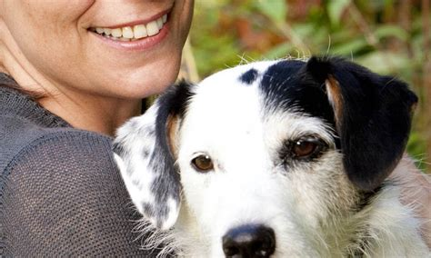 Pet Detective: Sykes the Jack Russell to become the first